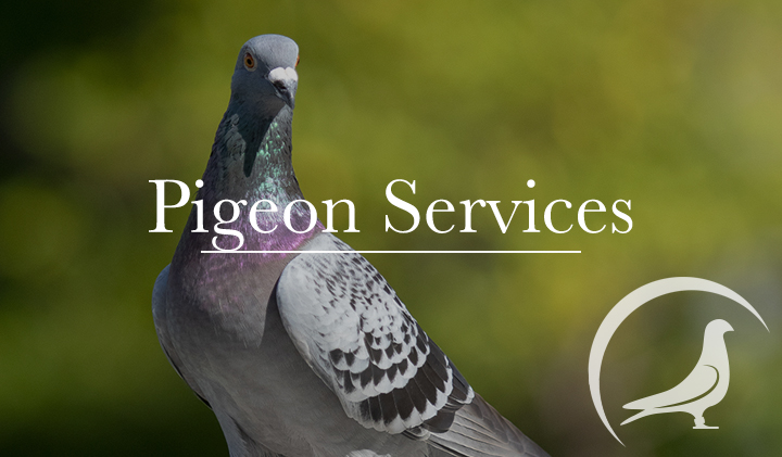 Pigeon Services